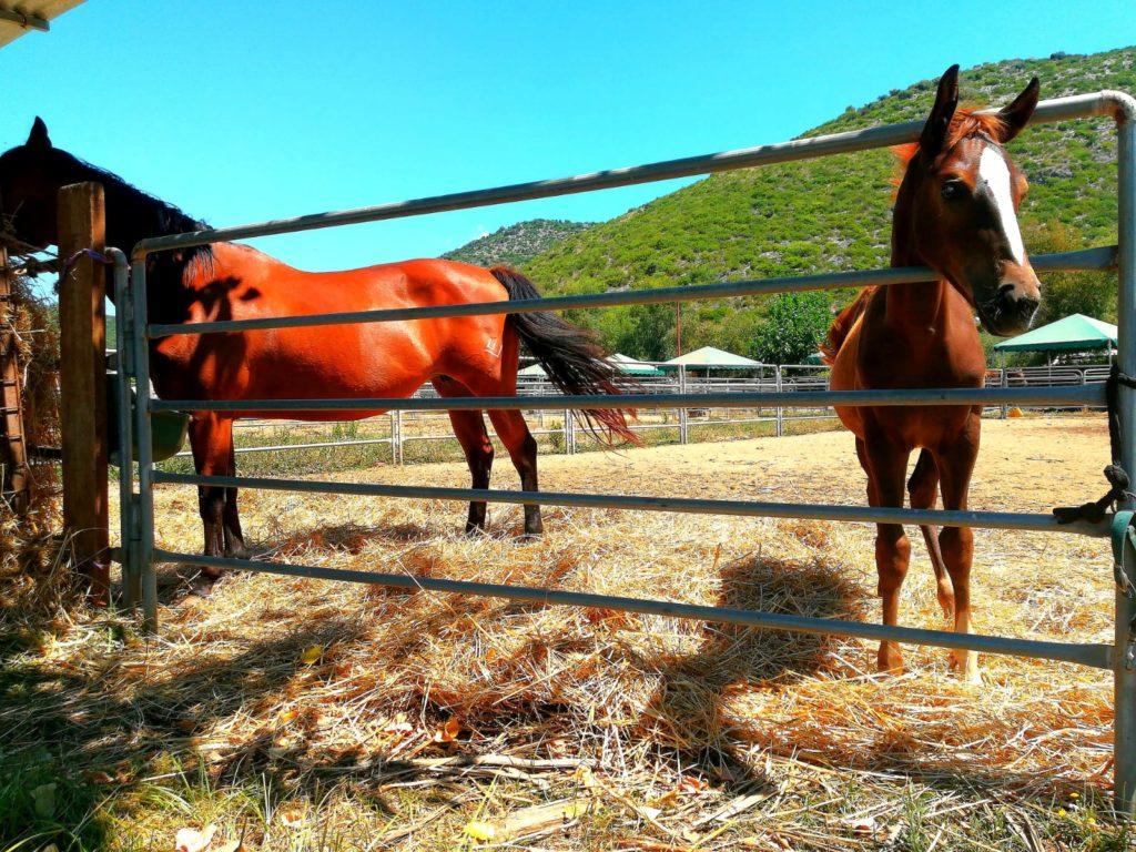 Zino Ranch Sperlonga